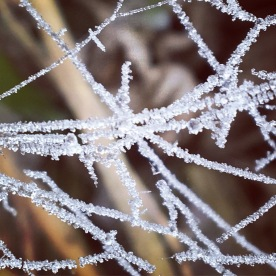 E-toile d'araignée
